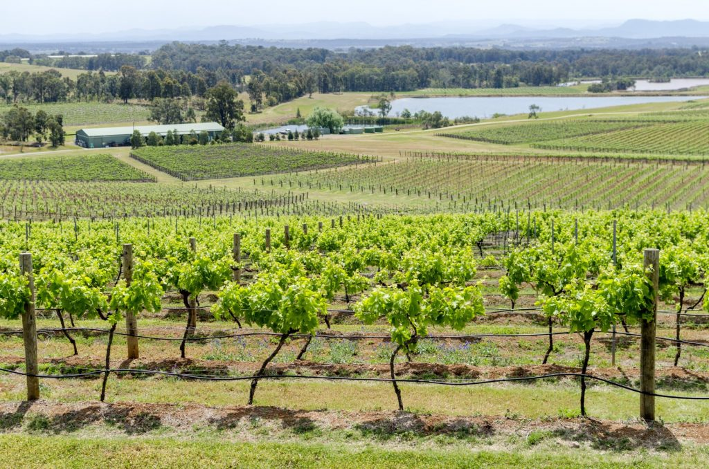 Rothbury Wine Tours -